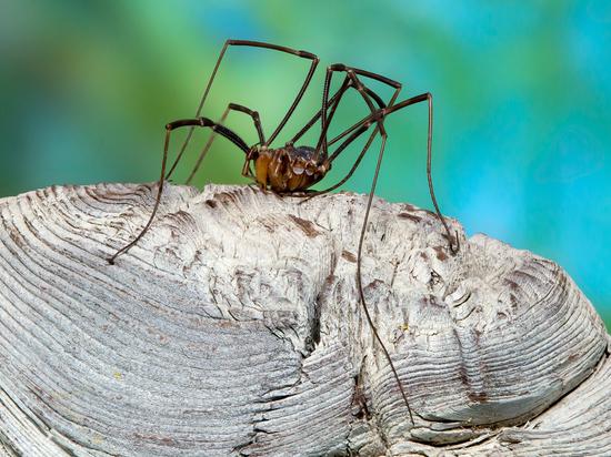 Редчайшего паука обнаружили на Алтае