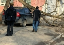 В кировском дворе дерево рухнуло на машину