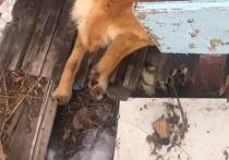Под Алексином нашли трупы живших при монастыре собак