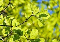 Сухое лето прогнозируется в Хабаровском крае