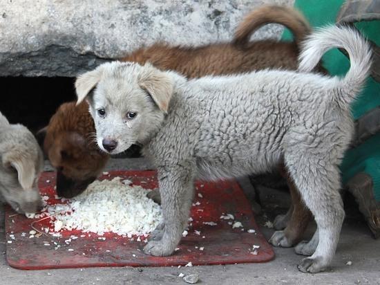 Читинцев призвали не кормить бездомных собак