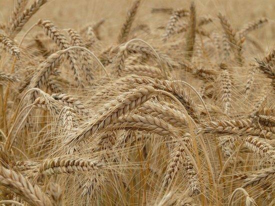 Погрузка алтайского зерна выросла в 1,5 раза