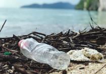 Ученые установили, сколько пластика поедают водные животные