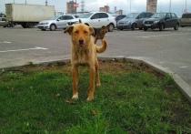 В Колюпаново продолжают подбрасывать собак