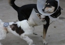 Приют для пострадавших животных «Краснодог» закрывается с 1 мая