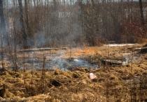 В Карелии участились случаи поджога сухой травы