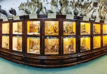 Виртуальные экскурсии появились на сайтах музеев Забайкалья