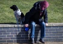 Коронавирус в Германии: Свобода передвижения ограничена и для собак