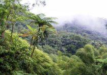 Доказано существование в Антарктиде доисторических тропических лесов