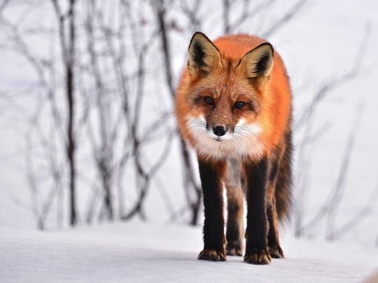 Воронежцев стали чаще кусать дикие животные