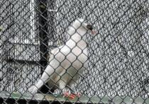В Химках даже голуби надели маску