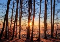 В Удмуртии обнаружили загрязнение леса отходами 4 класса опасности