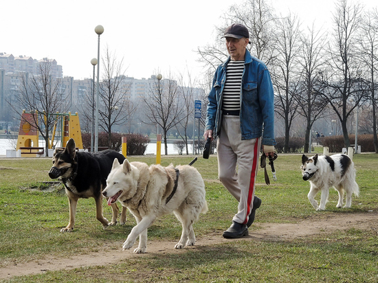 Догшеринг на самоизоляцию: владельцам собак запретили сдавать в аренду собак