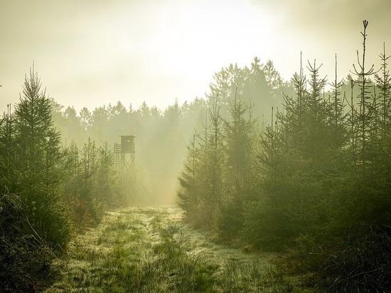 Все лесные пожары в Бурятии произошли по вине людей