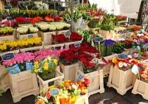 Коронавирус в Германии: Магазины для садоводства откроют для частных лиц