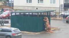 Во дворе Всеволожска заметили тираннозавра