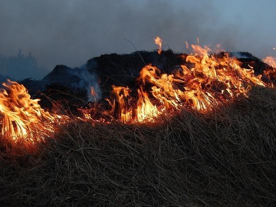 Рослехоз: В Забайкалье нарушают федеральный запрет на выжигание травы