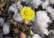 Снегопад сменится солнцем: погода в Туле никак не может определиться
