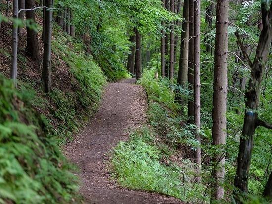 В Орле благоустроят территорию у Медведевского леса