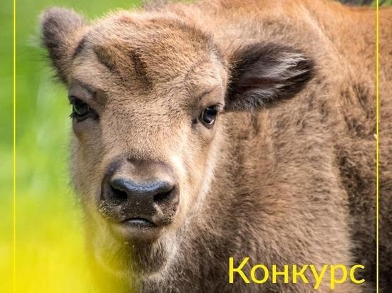 Сотрудники Приокско-Террасного заповедника объявили о фотоконкурсе