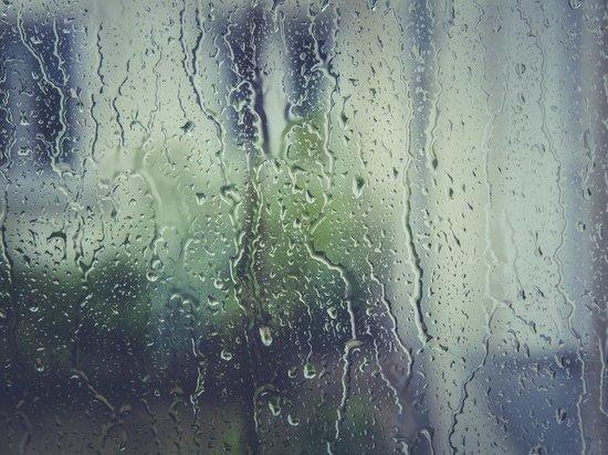В ближайшую среду на Брянщине 16-градусное тепло и дождь