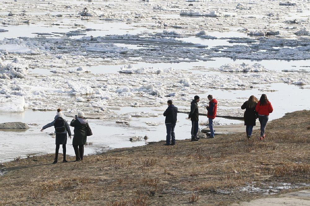 Бийчане и барнаульцы любуются ледоходом, несмотря на карантин