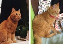 Владельцы убитого новосибирского кота Моти добились правосудия