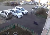 Видео ограбления ради еды 80-летней россиянки попало в Сеть