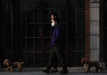 Источником заражения COVID-19 домашних животных считать нельзя - такое заявление сделал советник директора по научной работе Центрального НИИ эпидемиологии Роспотребнадзора Виктор Малеев