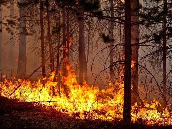 Пожары охватили более 18 тысяч гектаров леса в Забайкалье