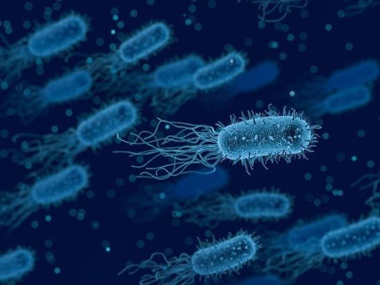Супербактерии могут быть опаснее коронавируса