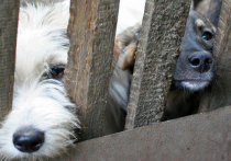 Жертвами коронавируса могут стать тысячи животных из приютов