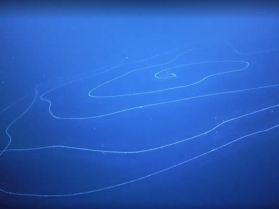 В океане обнаружен 50-метровый ядовитый хищник