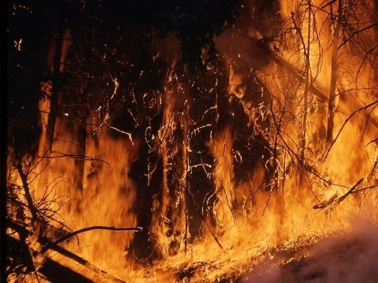 Украина задыхается от чернобыльских пожаров: люди тушат без защиты