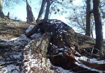 Жители Саратова сообщают о поваленных из-за непогоды деревьях