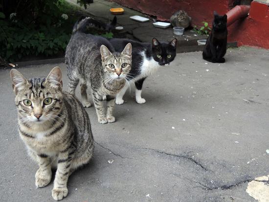 Коронавирус стал причиной соседских войн: «Кормит кошек из окна»