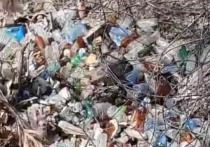 Судя по ролику, река заполнена различным мусором и кучей пластиковых бутылок