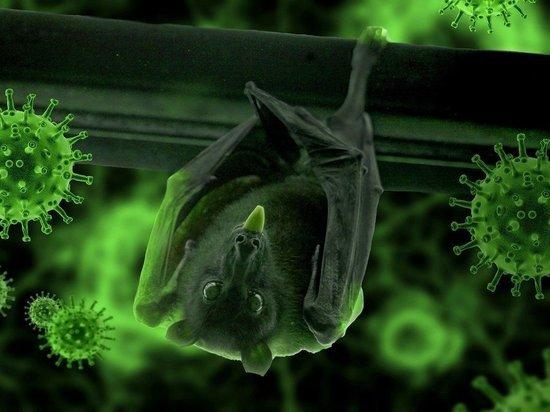 Ученые нашли у летучих мышей еще один тип коронавируса