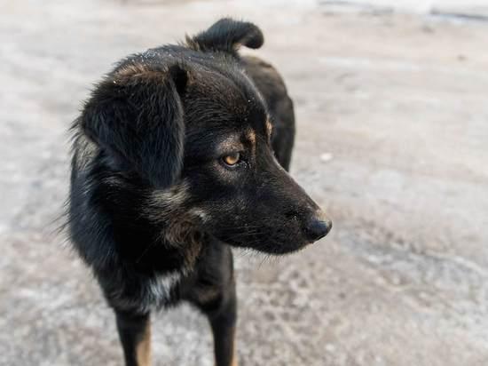 Волгоградцев призывают помочь животным в период пандемии