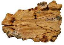 О первой находке на территории России останков древнего, вымершего несколько сотен тысяч лет назад этрусского медведя сообщили сотрудники  Палеонтологического института им