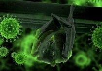 Вирусолог назвал невозможным искусственное происхождение коронавируса