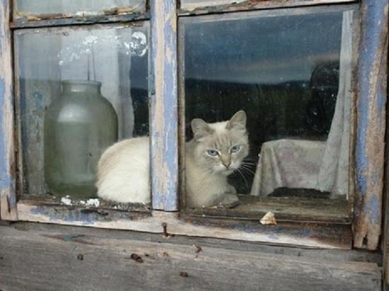 Жители калмыцкой столицы погибают от голода