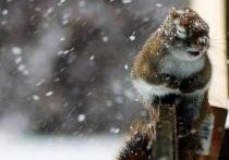 Воронеж и область предупредили о ночном снегопаде и сильном ветре
