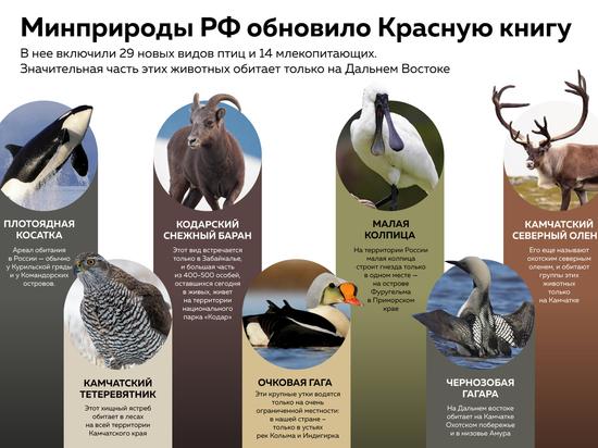 Красную книгу России обновили впервые за 23 года. Косатки, олени, гагары получили особый статус.