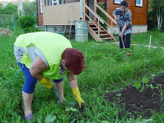 Члены СПЧ предложили ослабить карантин для огородников