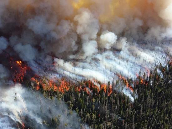 В Забайкалье лесной пожар охватил 700 гектаров тайги