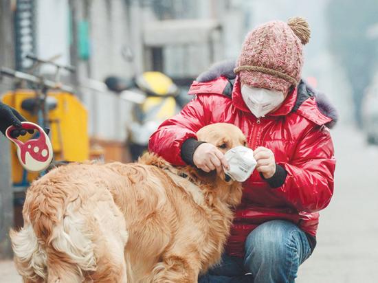 Коронавирус добрался до собак и кошек: хозяева могут не опасаться