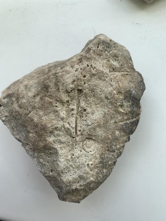 В Кимрах мужчина нашел окаменелости с древними организмами