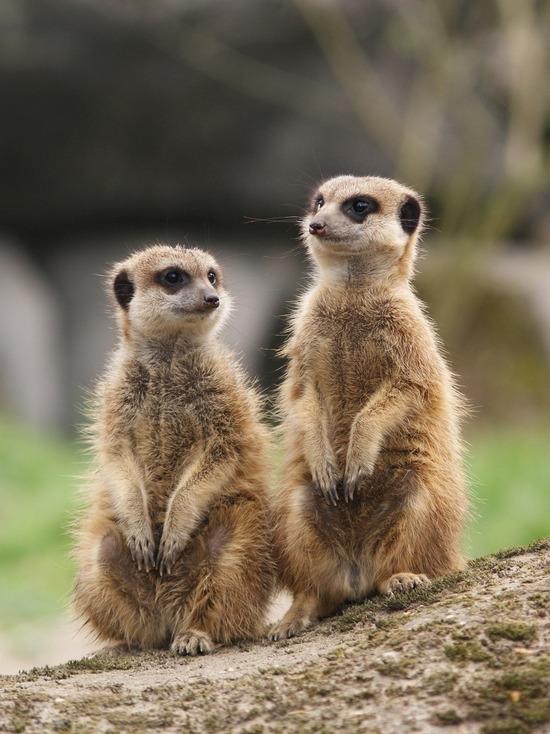 В Казани закрывшийся мини-зоопарк распродает экзотических животных