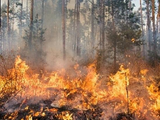 Муниципалитеты Алтайского края оказались не готовы к противопожарному сезону